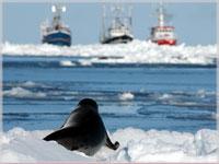 ¡No a la caza de focas!